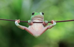 frog-photography-tantoyensen-15-5836fb81c8def__880