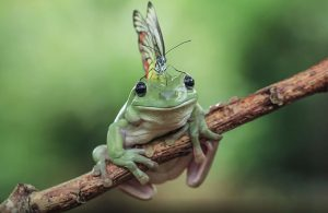 frog-photography-tantoyensen-20-5836fb8e09efa__880
