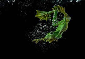 frog-photography-tantoyensen-27-5836fb9ec5094__880