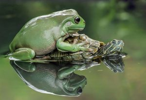 frog-photography-tantoyensen-37-5836fbbc20973__880