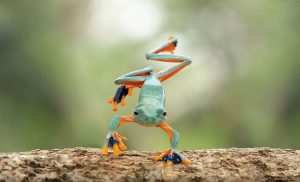 frog-photography-tantoyensen-7-5836fb69c27e4__880