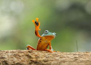 frog-photography-tantoyensen-9-5836fb70c9b54__880