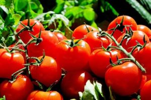 tomatoes-e1477689185279