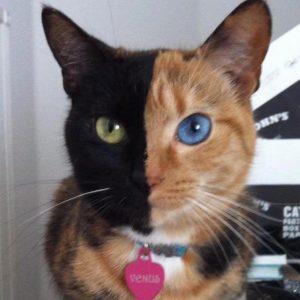 un-chat-un-visage-4-couleurs