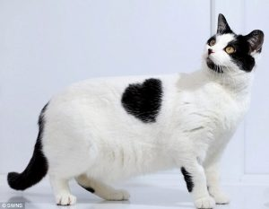 valentines-day-with-cats-10
