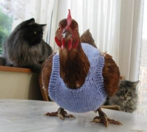 chicken-sweaters6