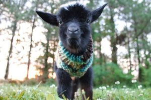 goat9