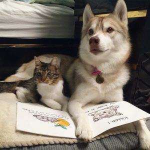 rosie-cat-grows-up-husky-mother-lilo-39